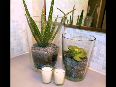 house plant aloe vera in pot picture set of indoor outdoor plants for home or cheap office plants