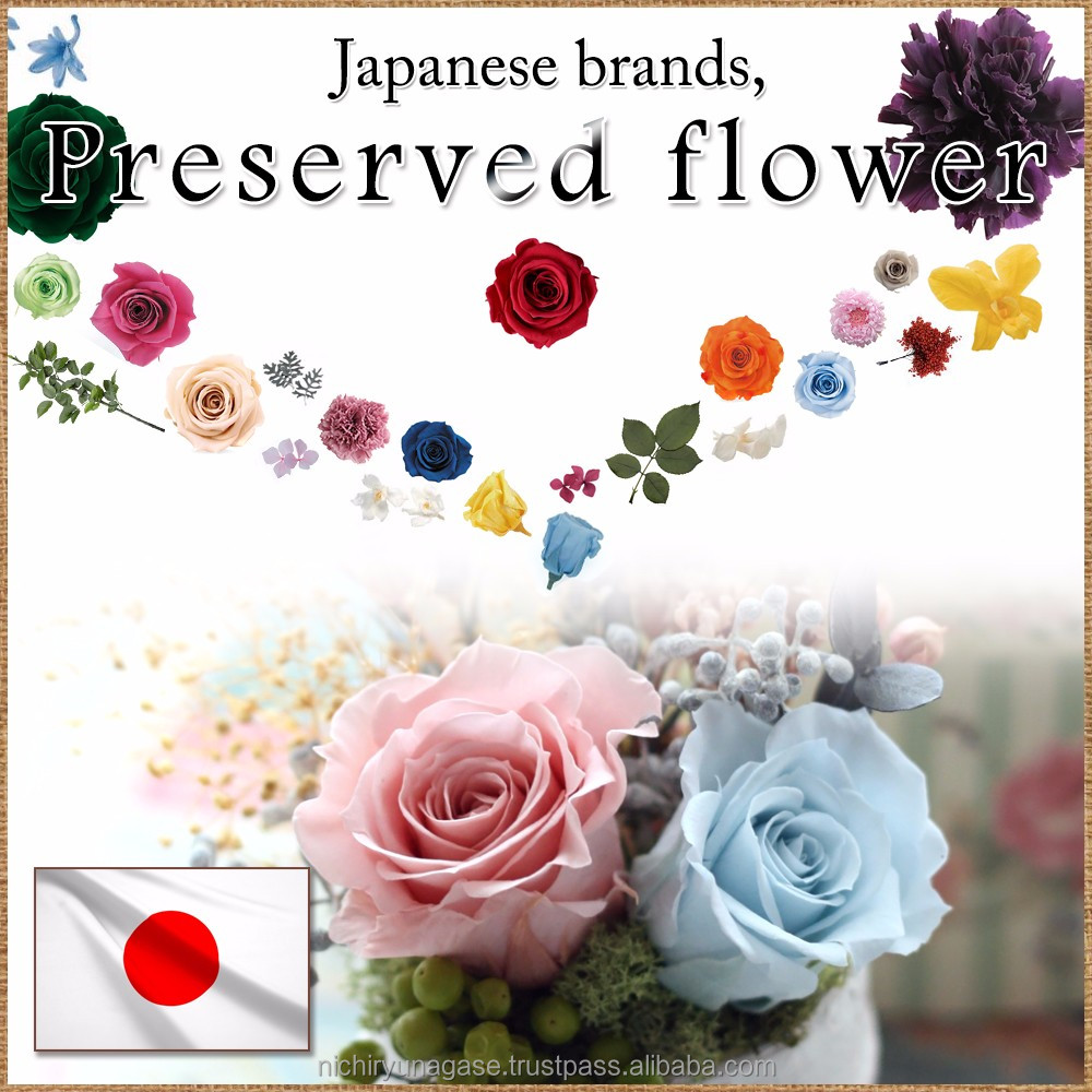 Beautiful and Fashionable jasmine dried flower preserved with various colors