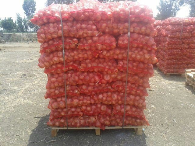 Liliaceous Vegetabless Product Type and Whole,Onion Type onion