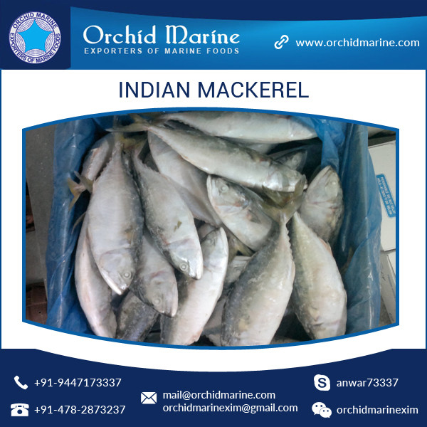 Best Quality Sea Frozen Whole Round Horse Mackerel Fish at Cheap Price