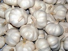 High Quality Fresh Vegetables Garlic