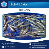 Reputed Exporter Supplying Easy To Make Frozen Anchovy at Reliable Price