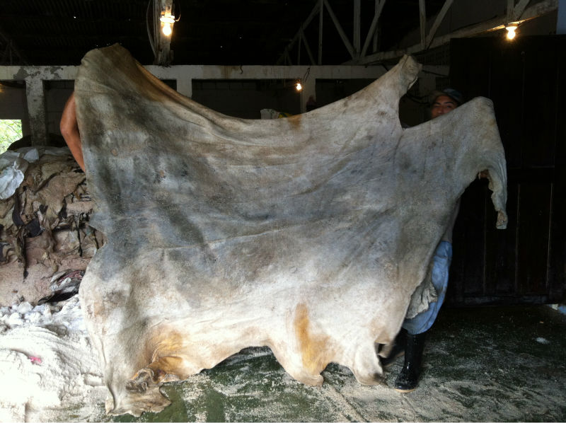 Wet and dry salted donkey skin/donkey hides/cow skin