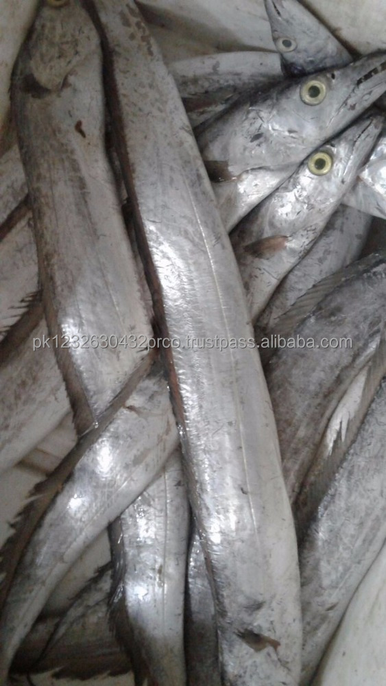 Major Export to china Frozen Ribbon Fish