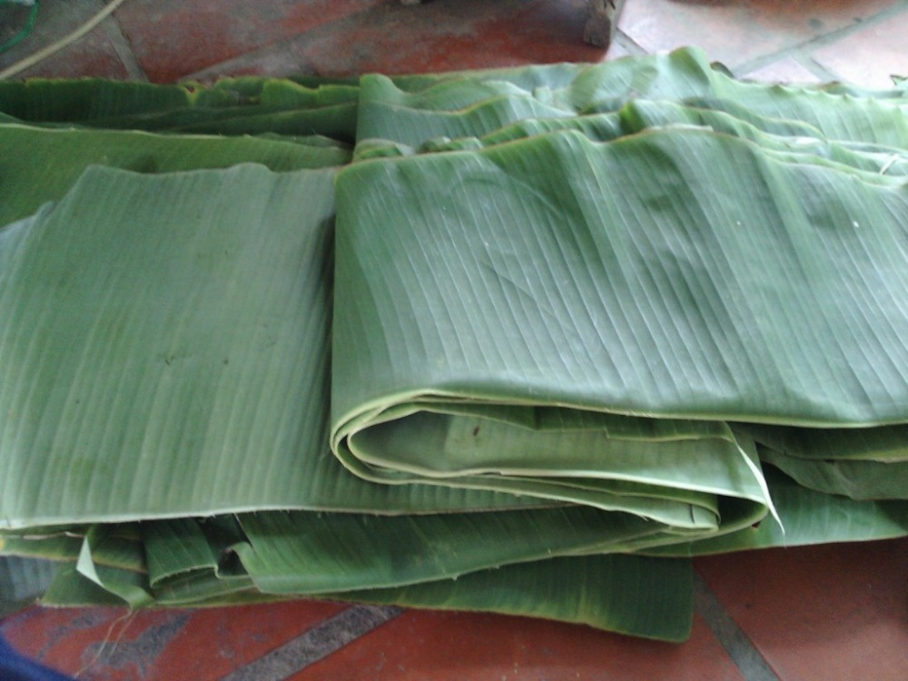 HIGH QUALITY FRESH BANANA LEAVES FOR SELL/ sales46@vdelta.com.vn