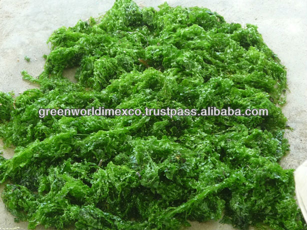 Dried Ulva Lactuca Seaweed with High Quality