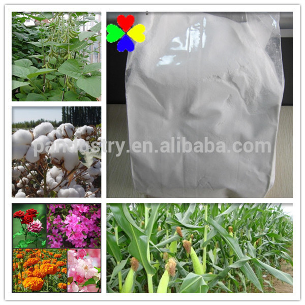 tissue culture plant 90%TC 1.5%EP Triacontanol PGR for bananas