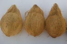 coconut supplier in india