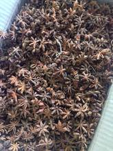 VIETNAM BEST PRICE STAR ANISE