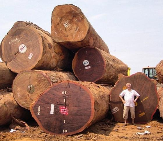 African hard wood timber Logs & lumber for sale