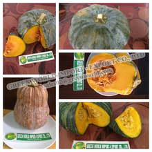 FRESH PUMPKIN - JAPANESE KIND- GOOD TASTY - GOOD SMELL!!!