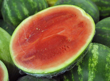 Top Quality and Fresh Watermelon for Sale South African Products