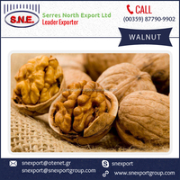 Nutrition Rich Cheap Rate Walnut with Kernels for Sale
