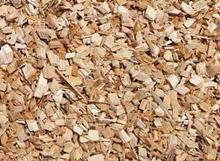 ACACIA WOOD CHIPS FOR PULPMILL