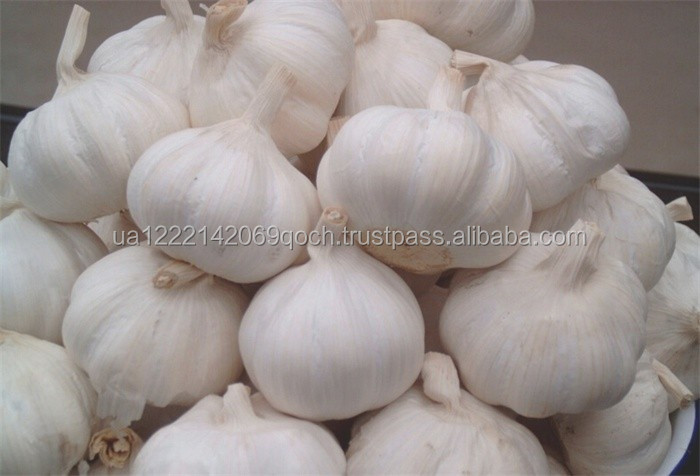 Quality fresh natural garlic