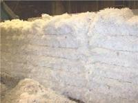 LDPE Film Scrap Available for Sale