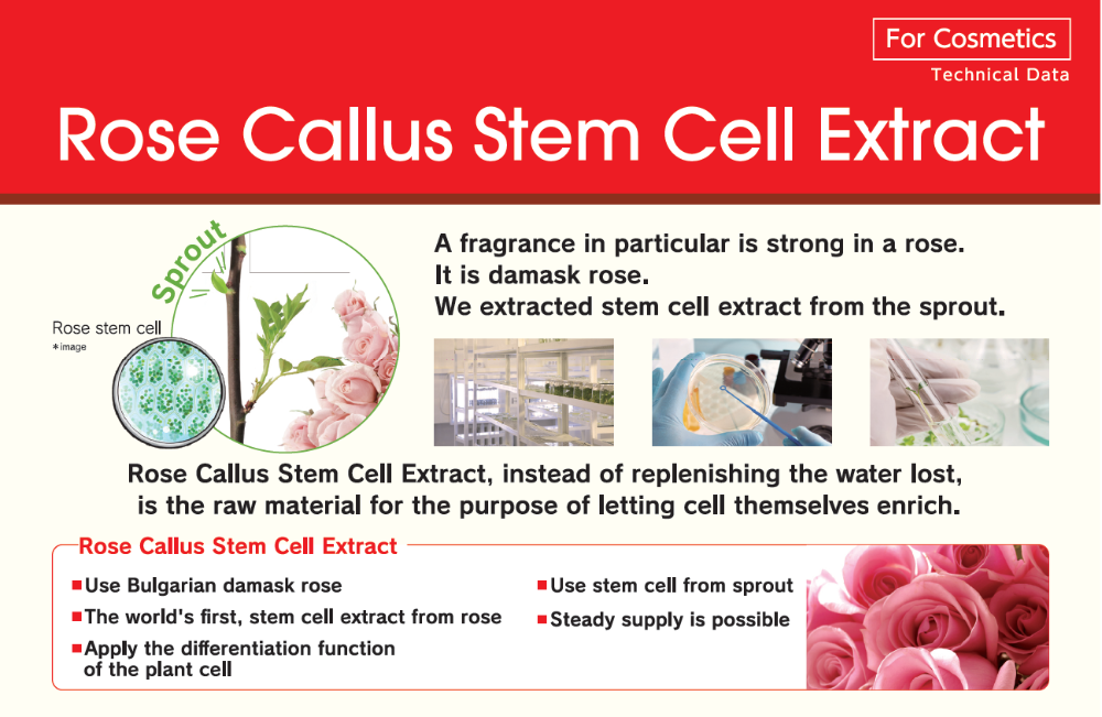 Japanese Rose Callus Stem Cell Extract For Cosmetics For Anti-oxidative, Anti-inflammatory, Anti-microbial, Skin Hydration