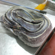 SEA FROZEN RIBBON FISH