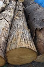 Kuri (Japanese Chestnut) Logs