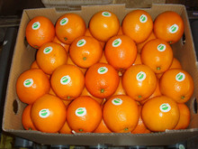 FRESH NAVEL ORANGE FROM SOUTH AFRICA READY FOR EXPORT