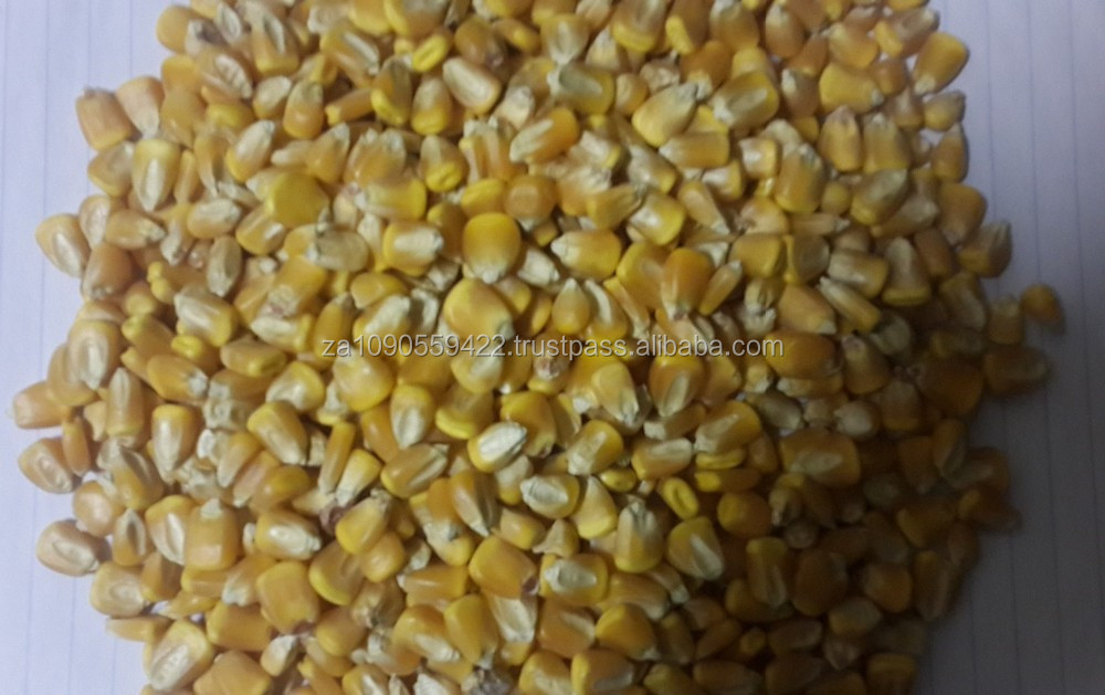White and Yellow Corn (Human Consumption & Animal Feed)