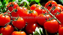 2016 Crop Top Fresh Red Tomato For Excellent Quality
