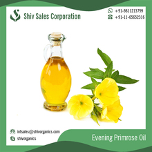 Best Quality Evening Primrose Carrier Oil for Best Hair from Trusted Brand