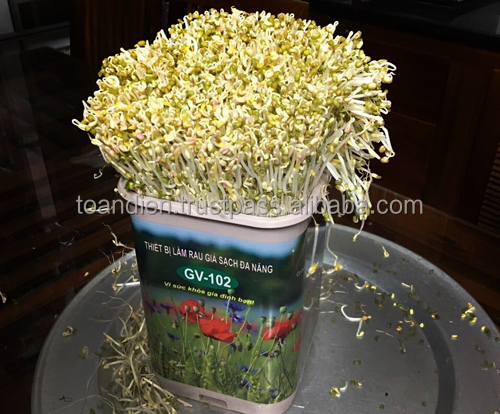 GV102 Home Sprout Making Machine|Home Bean Sprouter|GV102 High Quality Bean Sprout Making Machine|Toandien Bean Sprout Machine