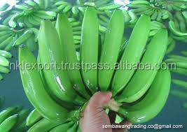 2016 FRESH GREEN CAVENDISH BANANAS - THAI ORIGIN