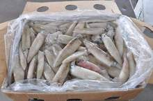 Best Quality Squid / Indonesia Seafood (The biggest maritime nation on earth)