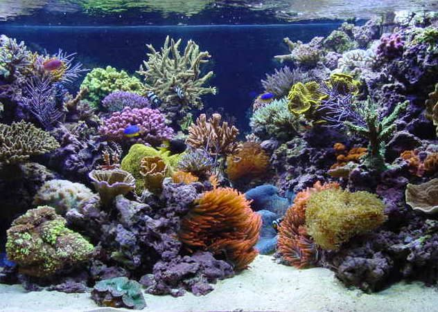 Live Corals, Fishes, Invetebrates And Live Rocks