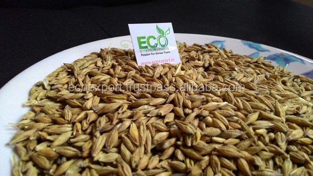 Indian Barley Grain Grade Vital Quality