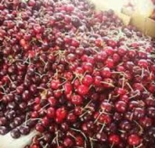 Grade A frozen fresh cherry for sale