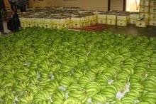 FRESH CAVENDISH BANANA / ECUADOR ORIGIN / LOWEST PRICE / HIGHEST QUALITY