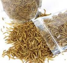 Dried mealworms wholesale chicken feed