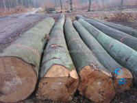 Best Offer European Beech Round Logs