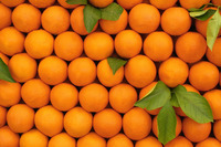 Fresh Citrus Fruits, Valencia and Navel Orange Wholesale Prices