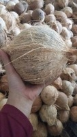 COCONUT FROM MEDAN INDONESIA BEST BUY A Grade