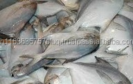 Sea Frozen White Silver Pomfret Fish