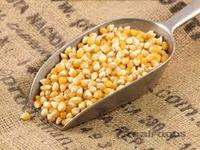 Popcorn maize For Sale