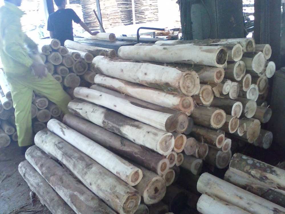 Viet Nam wood logs high quality for buyer