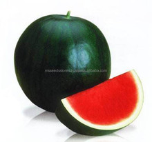 Black Tiger Hybrid Watermelon Seeds