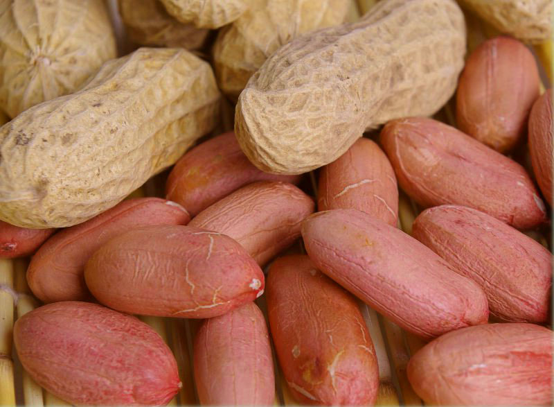 Indian Groundnut with Shell, Indian peanut with Shell, Raw shelled peanuts