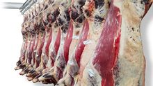 100% GRADED HALAL FROZEN BEEF MEAT FOR SALE