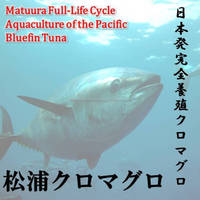 Matuura bluefin tuna has been brought up in care in a large fish tank of nature that Genkai.