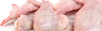 High Quality Frozen chicken wings for sale