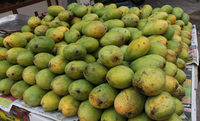 Fresh Alphanso Mango Available...