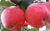 Best Fresh Red Fuji Apple