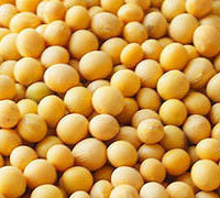 Non GMO High Protein Soybeans At Cheap Prices