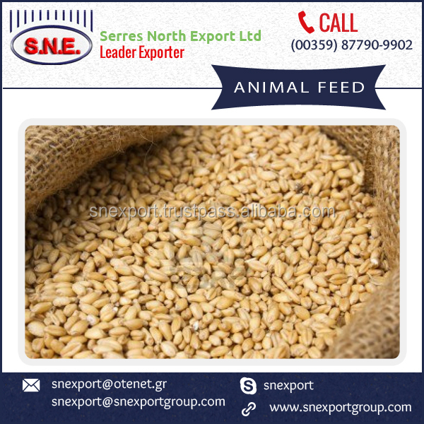 2016 Food Grade Meal for Animals, Mix Grains Feed at Cheap Rate